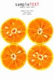 Naranja tropical fresca Fotos de archivo libres de regalías