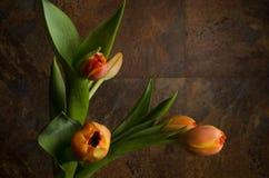 Naranja Tulipanes amarillos Imagen de archivo libre de regalías