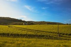 Naranja verde Imagen de archivo