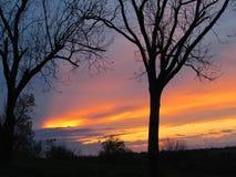 Naranja vibrante, oro Lavanda, puesta del sol azul con paisaje del árbol Imagen de archivo