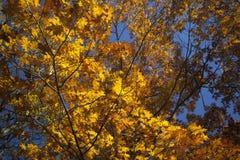 Naranja y azul Fotos de archivo libres de regalías