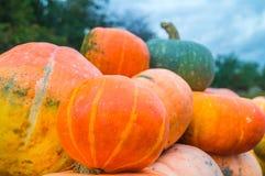 Naranja y calabaza del gree del jardín Fotografía de archivo libre de regalías