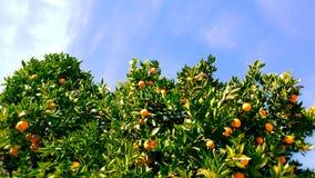 Naranja y cielo Foto de archivo
