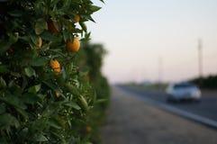 Naranja y coche Imagenes de archivo