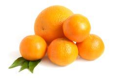 Naranja y mandarinas imagen de archivo