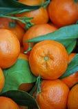 Naranja y mandarinas jugosas para la venta en el mercado vegetal foto de archivo
