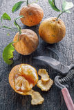 Naranjas amargas fotos de archivo