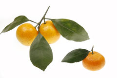 Naranjas con las hojas Fotografía de archivo