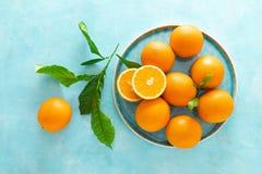 Naranjas con las hojas en fondo azul imagenes de archivo