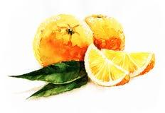 Naranjas de la acuarela stock de ilustración