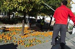 Naranjas de la cosecha en la calle 9 Fotografía de archivo