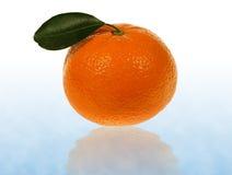 Naranjas de la mandarina Fotografía de archivo libre de regalías