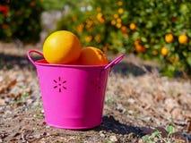 Naranjas en el cubo Fotos de archivo