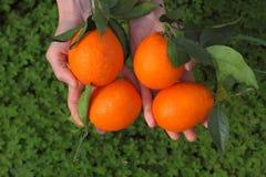 Naranjas en manos Foto de archivo