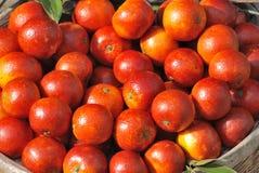 Naranjas frescas Imagenes de archivo