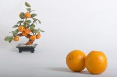 Naranjas maduras y árbol anaranjado Imágenes de archivo libres de regalías