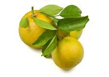 Naranjas orgánicas Imagenes de archivo