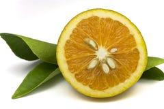Naranjas orgánicas Fotos de archivo libres de regalías