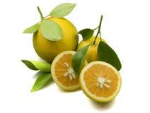 Naranjas orgánicas Fotografía de archivo