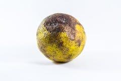 Naranjas putrefactas Foto de archivo libre de regalías