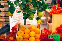 Naranjas y árbol de limón sicilianos Foto de archivo
