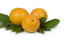 Naranjas y hojas Foto de archivo libre de regalías