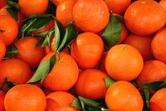 Naranjas y hojas Imagenes de archivo