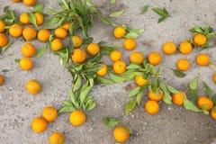 Naranjas y hojas caidas en la tierra Imagen de archivo libre de regalías