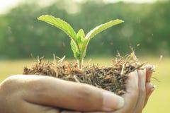 Narastająca roślina na ludzkiej ręce Zdjęcie Royalty Free
