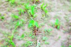 Narastająca roślina od de suchego piaska obrazy royalty free
