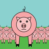 Narastające świnie Obrazy Stock