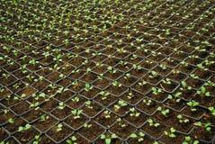 narastające małe rośliny Zdjęcie Royalty Free