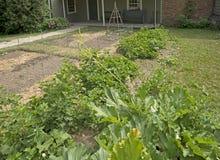 Narastający jarzynowy ogród w wiośnie Zdjęcia Stock