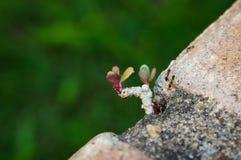 Narastający mały drzewo na cegle Obraz Stock