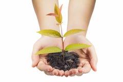narastający ręk rośliny potomstwa Fotografia Stock
