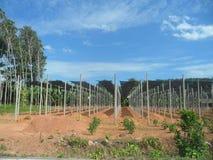 Narastający rośliny gospodarstwo rolne Obraz Stock