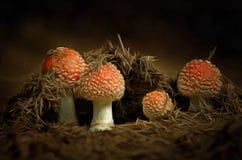 Narastający Czerwoni muchomory Obrazy Royalty Free