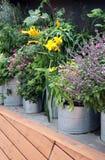 Narastający warzywa tak jak balii rośliny Zdjęcia Royalty Free