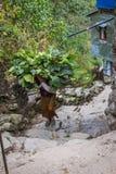 NARCHYANG, NEPAL 18. MÄRZ: Himalajaleute 18, 2015 in Narchyan Lizenzfreie Stockfotografie