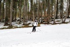 Narciarka jest narciarstwa puszkiem skłon w drewnach Zdjęcie Royalty Free