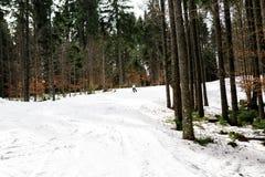 Narciarka jest narciarstwa puszkiem skłon w drewnach Zdjęcia Stock
