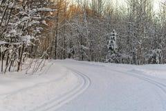 Narciarski ślad w zima lesie iść wokoło chyłu w promieniach położenia słońce obraz royalty free