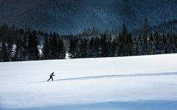 Narciarski biegacz w Tatras. Zdjęcia Stock