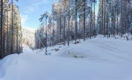 Narciarski piste wśród lasu na ośrodku narciarskim w Carpathians zdjęcie stock