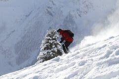 narciarstwa jedlinowy drzewo obraz royalty free