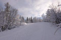 Narciarstwo ślad w zima lesie Zdjęcia Stock