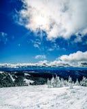 Narciarstwo wśród śniegi Zakrywających drzew pod niebieskimi niebami i Jaskrawym słońcem zdjęcie royalty free