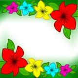 narcis цветка предпосылки Стоковые Фотографии RF