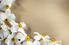 Narcis frame. Frame with narcis flowers on brown background Royalty Free Stock Photography