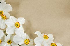 Narcis frame. Frame with narcis flowers on brown background Stock Photo